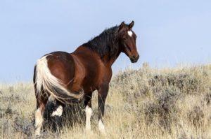 Gratis Healing Paard door healer Anita Poelman